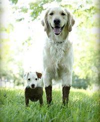 what mud?