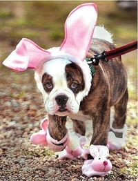 dog in bunny outfit