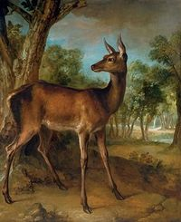 The Watchful Doe, Jean-Baptiste Oudry 1720-29.