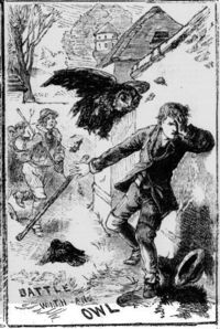 Illustrated Police News 3 June 1882: A son of a farmer of Marhamchurch has been admitted into Stratton Hospital suffering from severe injuries inflicted upon him by an owl. A pair of owls had made their home in an elm-tree, and made raids on the farmer...