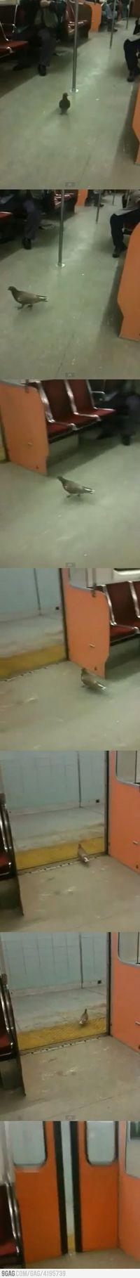 Just a normal pigeon in the Subway