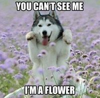 You can't see me, I'm a flower!