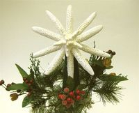 Starfish Tree Topper - Natural Starfish
