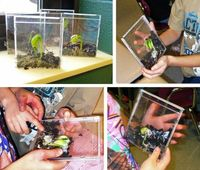 teaching kids about growing plants using a cd case - so cool!