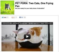 PET PORN: Two cats, one frying pan!