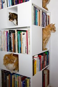 The CatCase: a Bookcase and a Ideal Playground for Your Cat