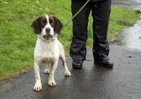 Grouse: shelter stray to Olympic games detection dog