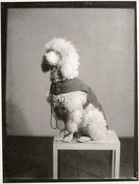 Man Ray, Gertrude Stein's Dog, Paris, 1921