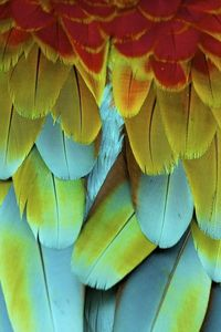 A rainbow of feathers.
