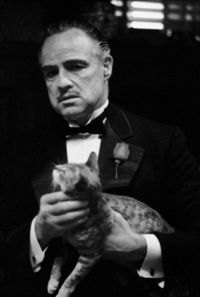 Steve Schapiro [The Godfather] Gangster cat