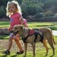 A 3-year-old girl in Texas who suffers from a rare form of infant diabetes wouldn't be alive today if she didn't have a diabetic alert dog, her mother says.