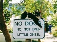 NO dogs.
