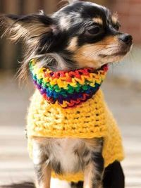 """Free pattern for """"Pooch Pullovers""""!"""