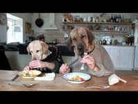Dogs dining