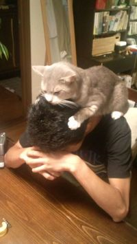 Cat on the Head.