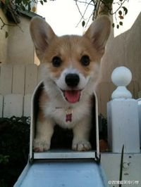 You've got mail! Corgie
