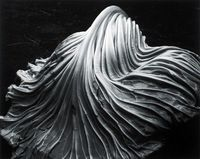 cabbage leaf - Edward Weston, 1931