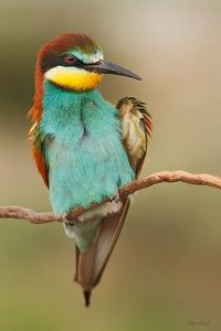 Gorgeous bird - Spain