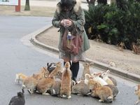 "�€œOkunoshima is a small Japanese island, located in the Inland Sea of Japan, in the Hiroshima Prefecture. What's special about this place is that it is completely crawling with rabbits �€"" a bunny paradise of sorts. Nicknamed ..."